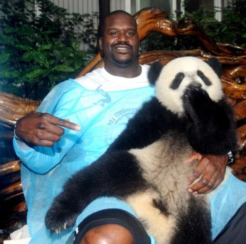 shaq panda